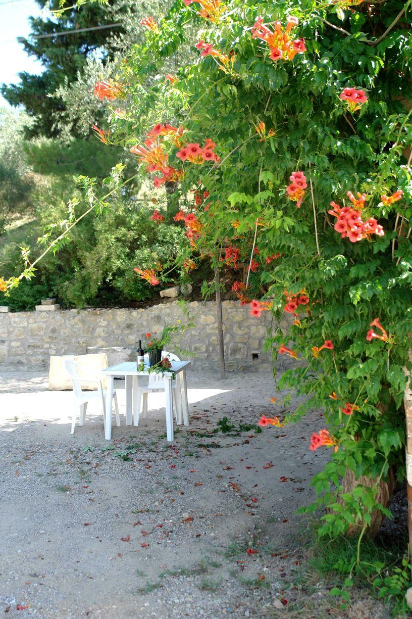 Apartment Tenuta Le Sodole - Holiday Home Il Glicine photo 31807872